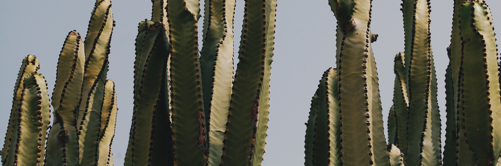 city header mexico cactus