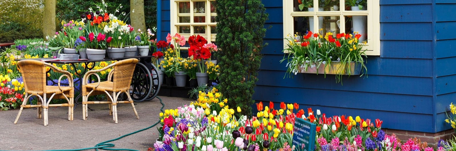 city header netherlands house tulips