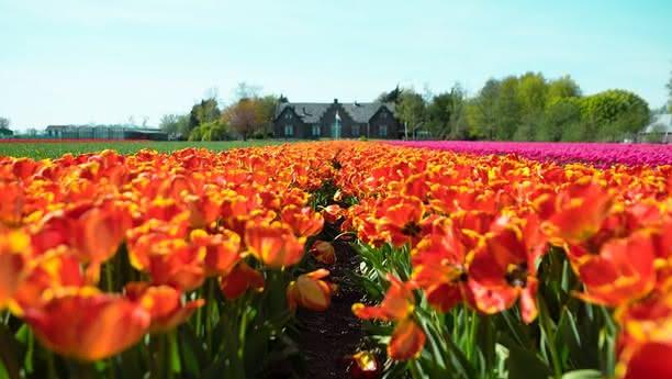 Viaje cómoda y libremente por Holanda con Sixt