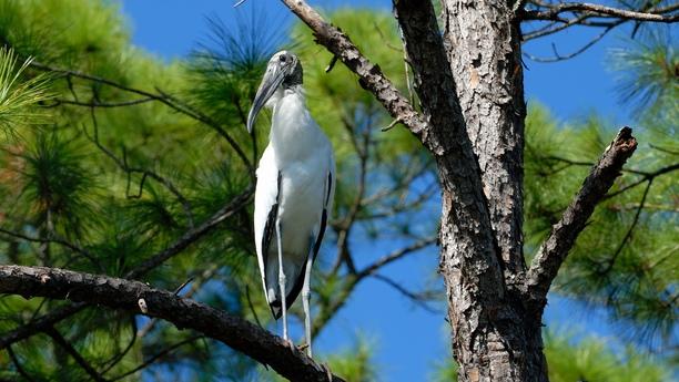 Noleggio auto all'Everglades National Park di Sixt: ampia gamma di servizi