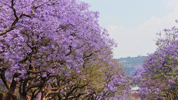 Location de voiture au centre de Pretoria - Sixt