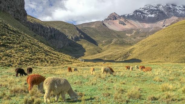 ecuador country content