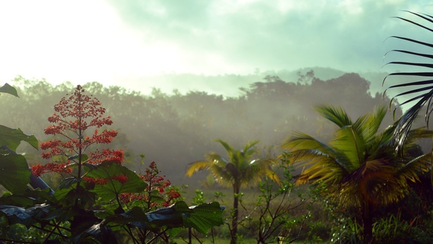 french guiana country side