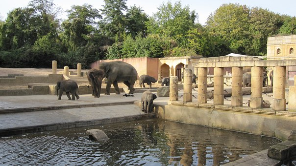 zoo hannover 66352 340